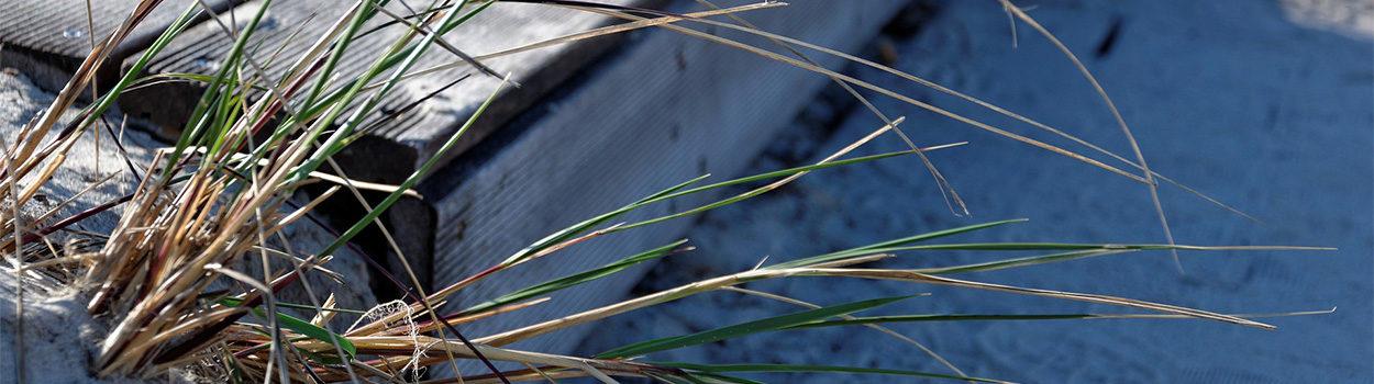 Gräser im Sandstrand